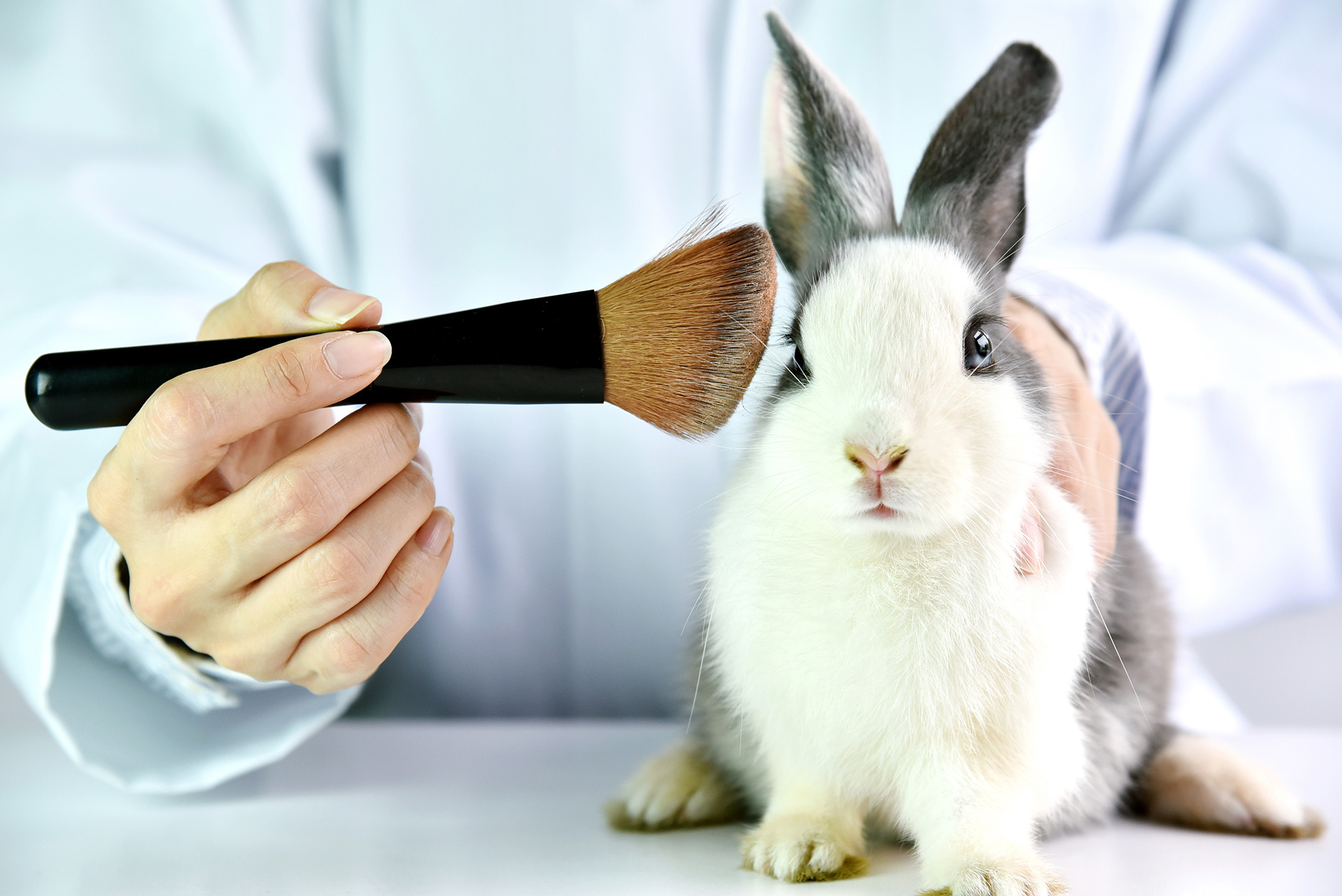 CHOOSE COSMETICS THAT ARE NOT TESTED ON ANIMALS – Centaurus ...